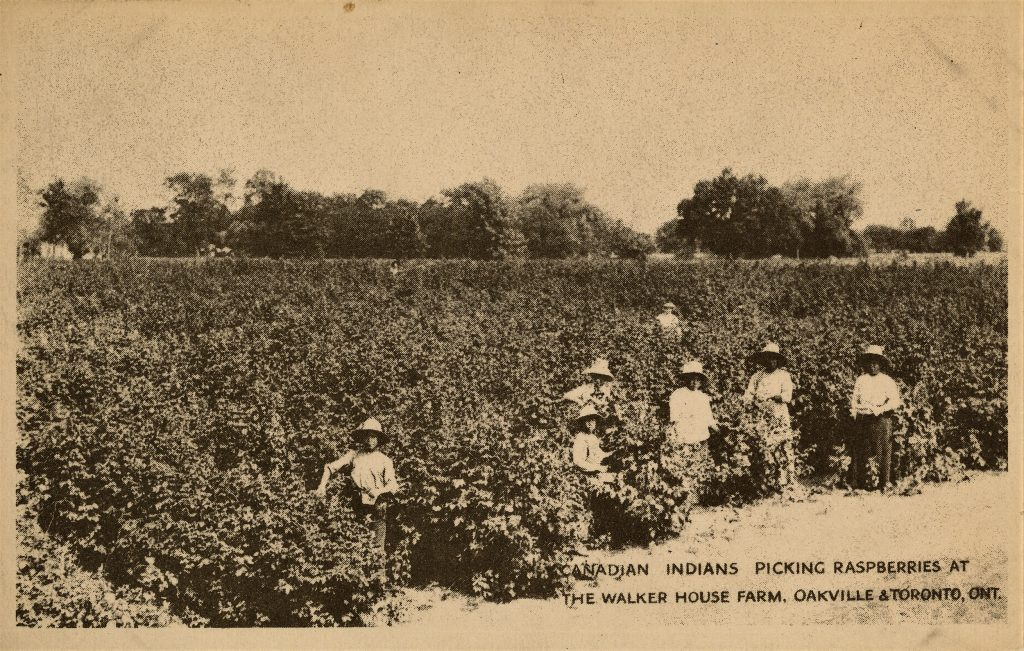 Canadian Indians Picking Raspberries at the Walker House Farm. Oakville & Toronto, ONT., n.d. Courtesy: Oakville Historical Society Archive.